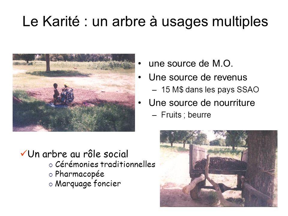 Le Karité : un arbre à usages multiples une source de M.O.