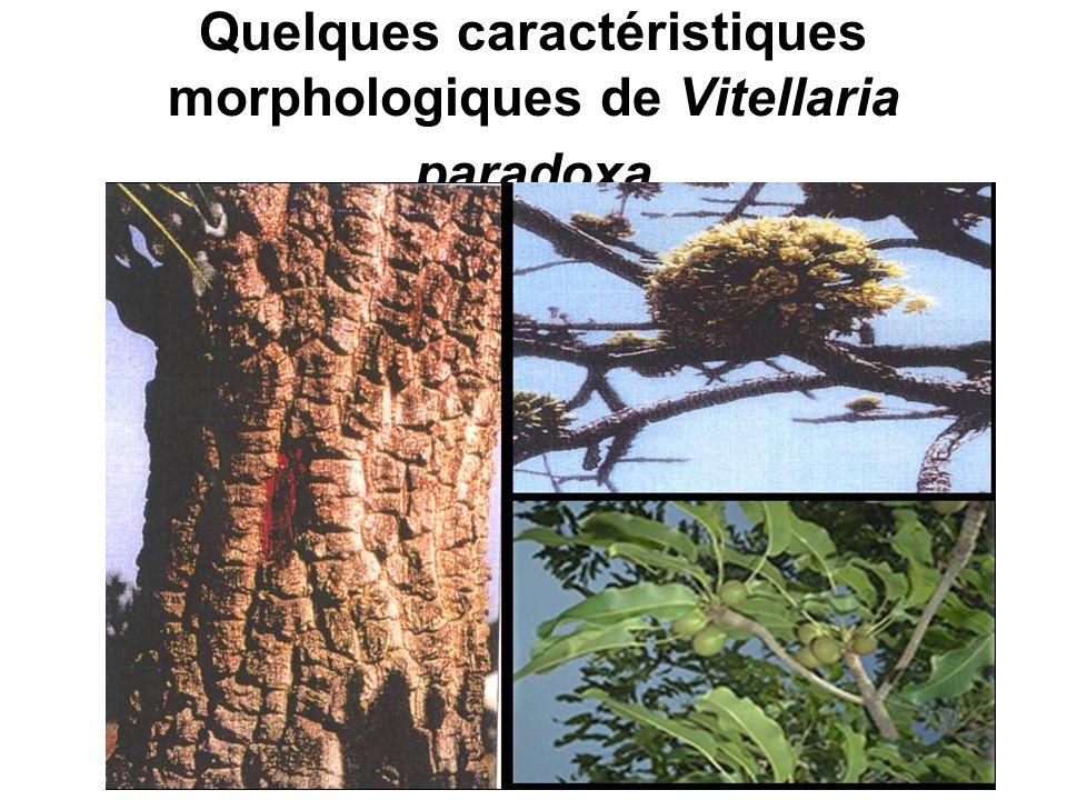 Quelques caractéristiques morphologiques de Vitellaria paradoxa