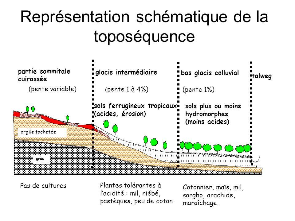Représentation schématique de la toposéquence grès argile tachetée (pente 1%) bas glacis colluvial talweg sols plus ou moins hydromorphes (moins acides) Pas de cultures Plantes tolérantes à lacidité : mil, niébé, pastèques, peu de coton Cotonnier, maïs, mil, sorgho, arachide, maraîchage… (pente variable) glacis intermédiaire ( pente 1 à 4%) sols ferrugineux tropicaux (acides, érosion) partie sommitale cuirassée