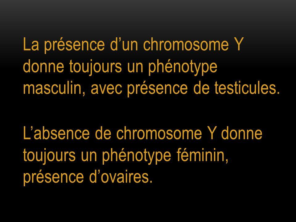 La présence dun chromosome Y donne toujours un phénotype masculin, avec présence de testicules. Labsence de chromosome Y donne toujours un phénotype f