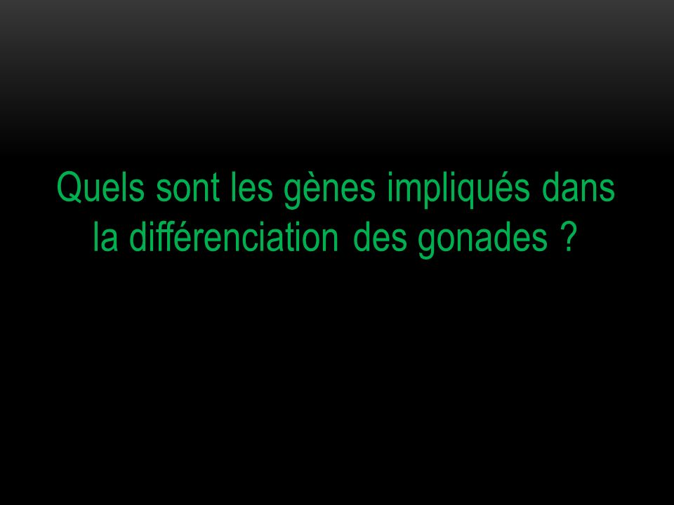 Quels sont les gènes impliqués dans la différenciation des gonades ?