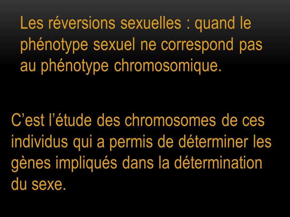 Les réversions sexuelles : quand le phénotype sexuel ne correspond pas au phénotype chromosomique. Cest létude des chromosomes de ces individus qui a