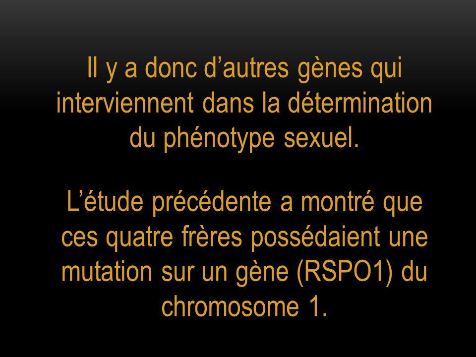 Il y a donc dautres gènes qui interviennent dans la détermination du phénotype sexuel. Létude précédente a montré que ces quatre frères possédaient un