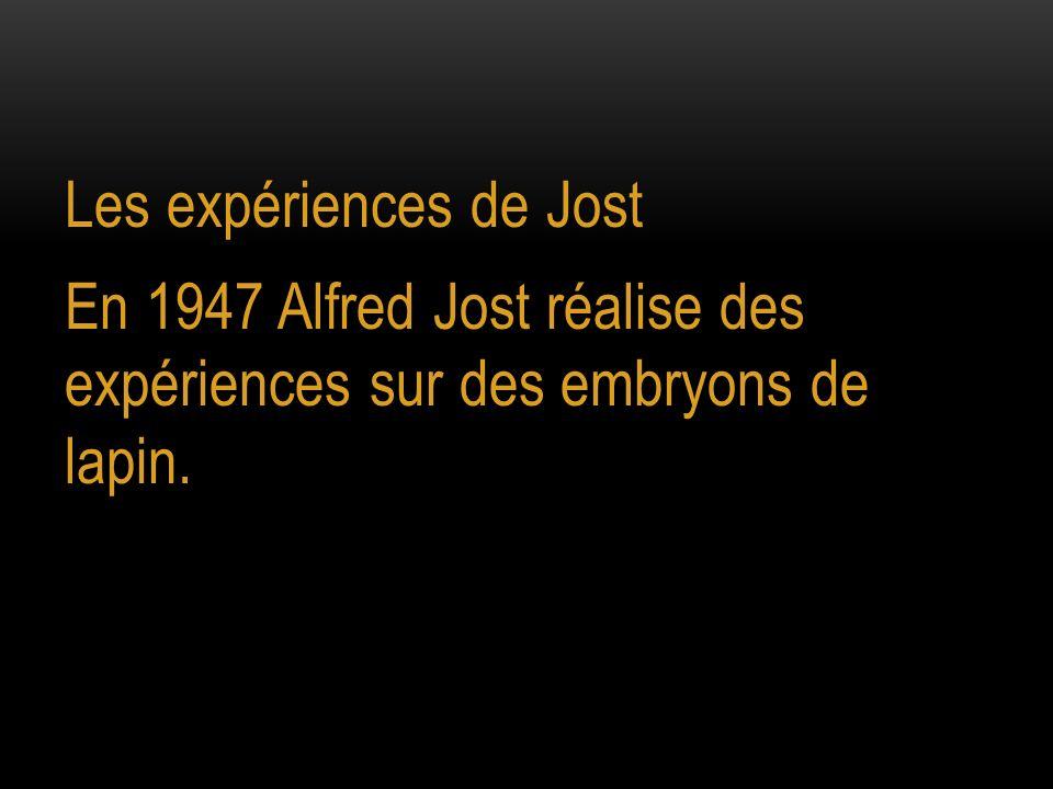 Les expériences de Jost En 1947 Alfred Jost réalise des expériences sur des embryons de lapin.