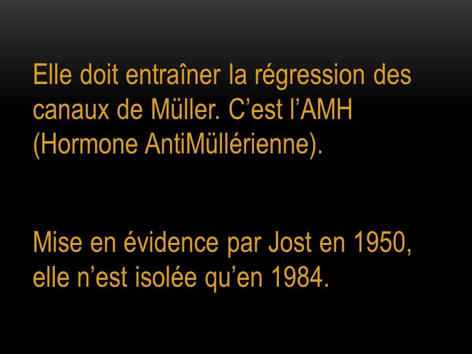Elle doit entraîner la régression des canaux de Müller. Cest lAMH (Hormone AntiMüllérienne). Mise en évidence par Jost en 1950, elle nest isolée quen