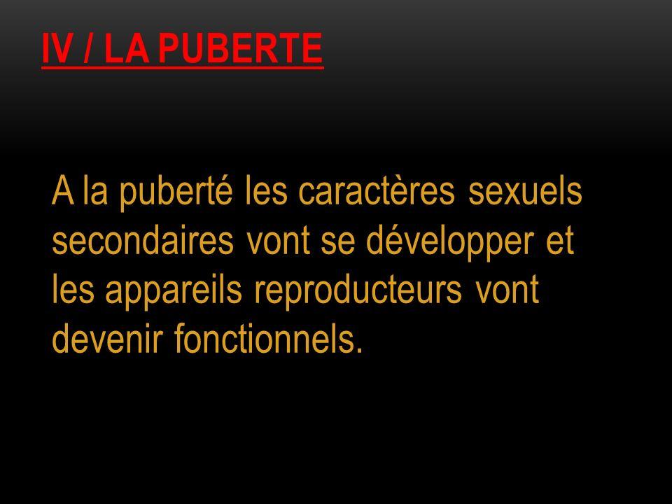 IV / LA PUBERTE A la puberté les caractères sexuels secondaires vont se développer et les appareils reproducteurs vont devenir fonctionnels.