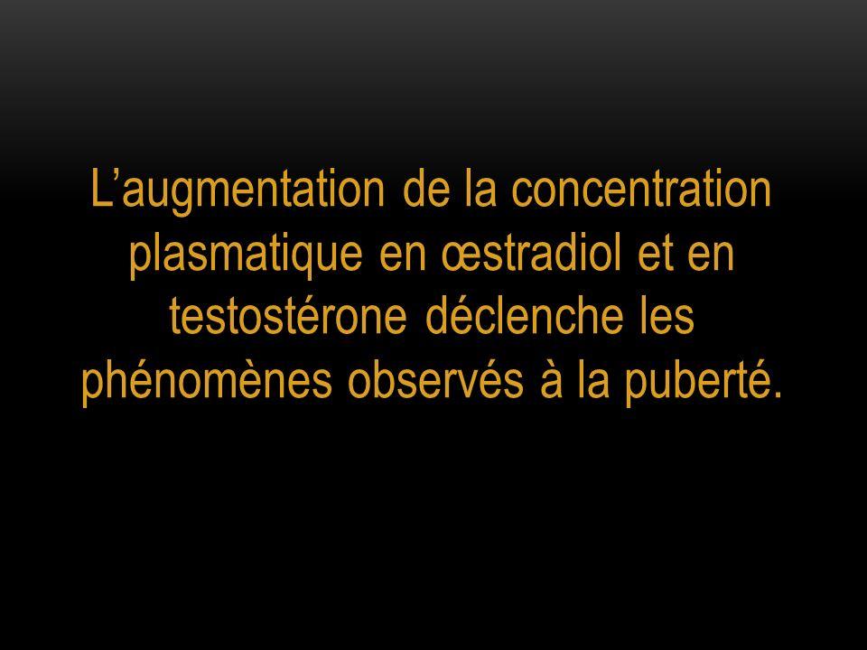 Laugmentation de la concentration plasmatique en œstradiol et en testostérone déclenche les phénomènes observés à la puberté.