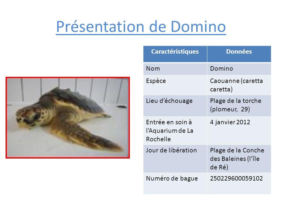 Présentation de Domino CaractéristiquesDonnées NomDomino EspèceCaouanne (caretta caretta) Lieu déchouagePlage de la torche (plomeur, 29) Entrée en soi