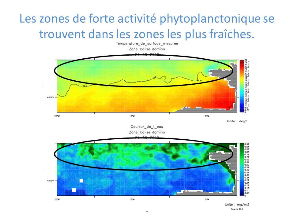 Les zones de forte activité phytoplanctonique se trouvent dans les zones les plus fraîches.