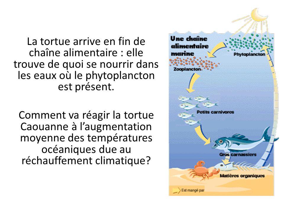 La tortue arrive en fin de chaîne alimentaire : elle trouve de quoi se nourrir dans les eaux où le phytoplancton est présent. Comment va réagir la tor