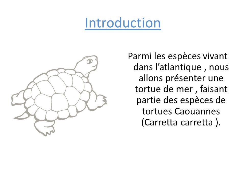 Introduction Parmi les espèces vivant dans latlantique, nous allons présenter une tortue de mer, faisant partie des espèces de tortues Caouannes (Carr