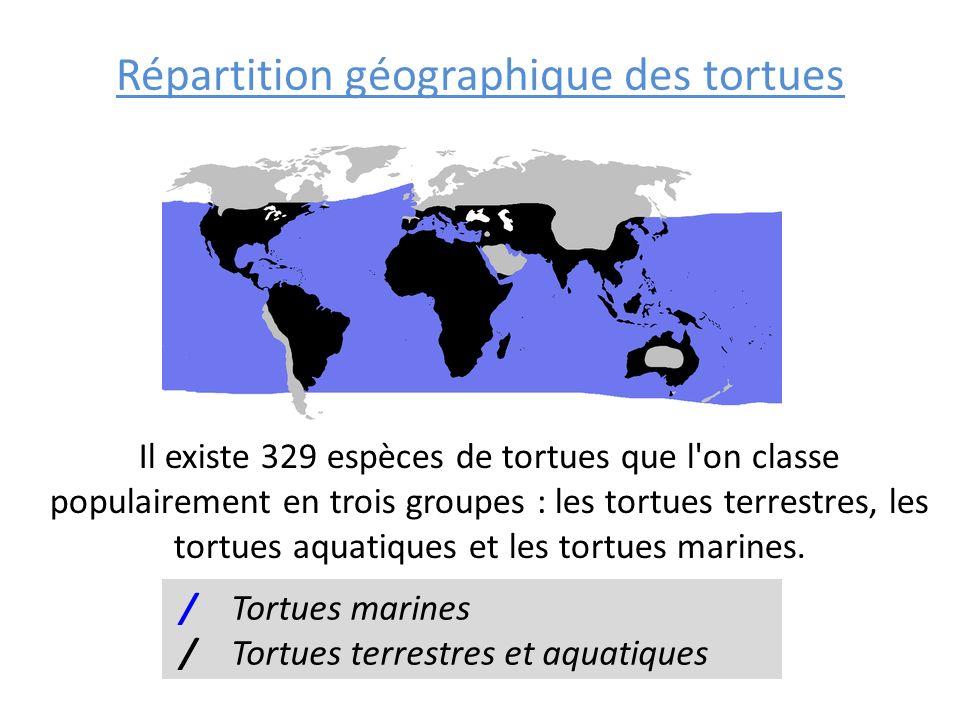 Répartition géographique des tortues Il existe 329 espèces de tortues que l'on classe populairement en trois groupes : les tortues terrestres, les tor