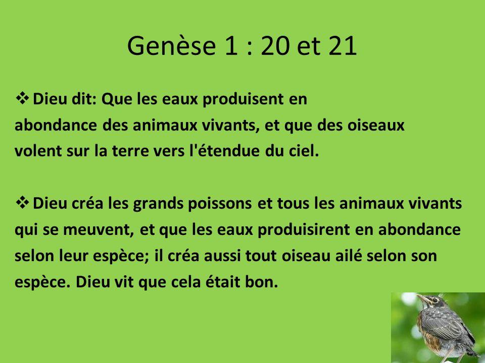 Genèse 1 : 20 et 21 Dieu dit: Que les eaux produisent en abondance des animaux vivants, et que des oiseaux volent sur la terre vers l'étendue du ciel.