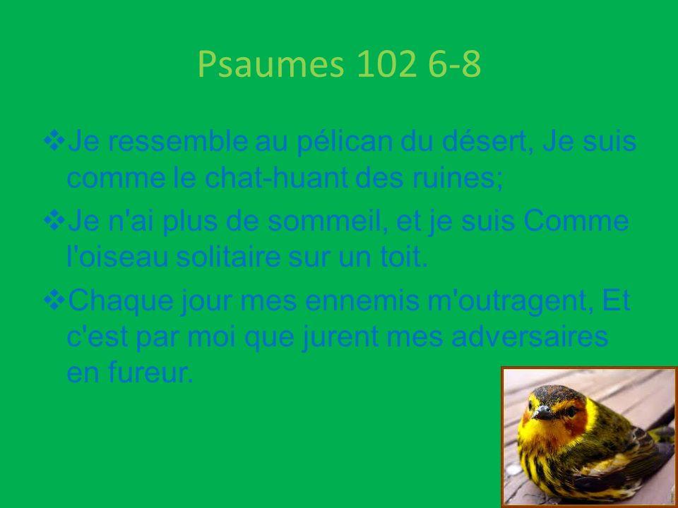 Psaumes 102 6-8 Je ressemble au pélican du désert, Je suis comme le chat-huant des ruines; Je n'ai plus de sommeil, et je suis Comme l'oiseau solitair
