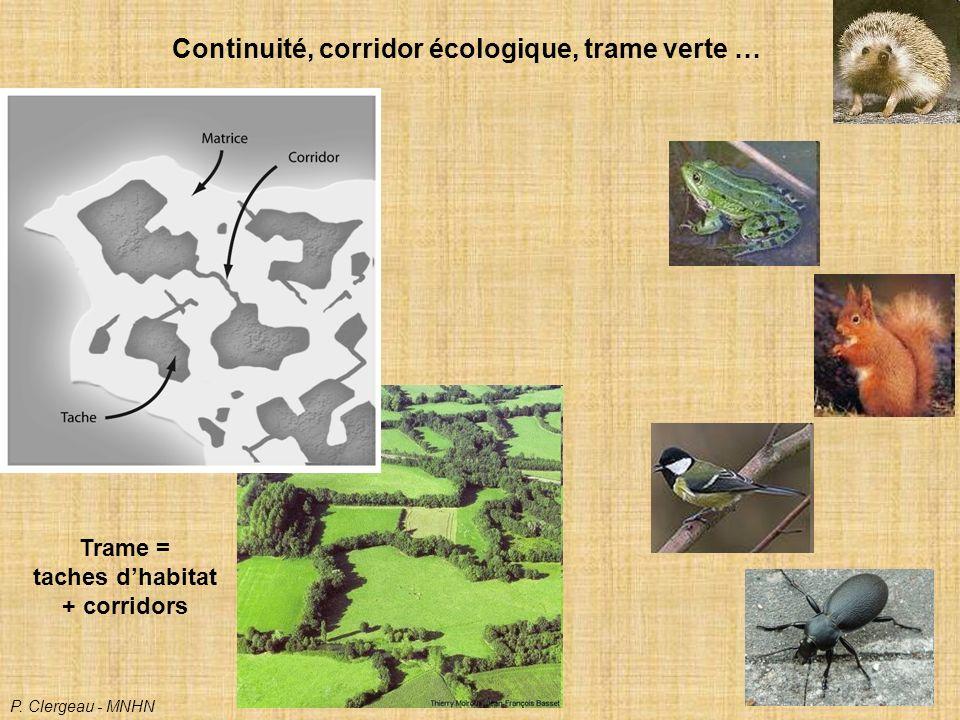 Continuité, corridor écologique, trame verte … Trame = taches dhabitat + corridors P.