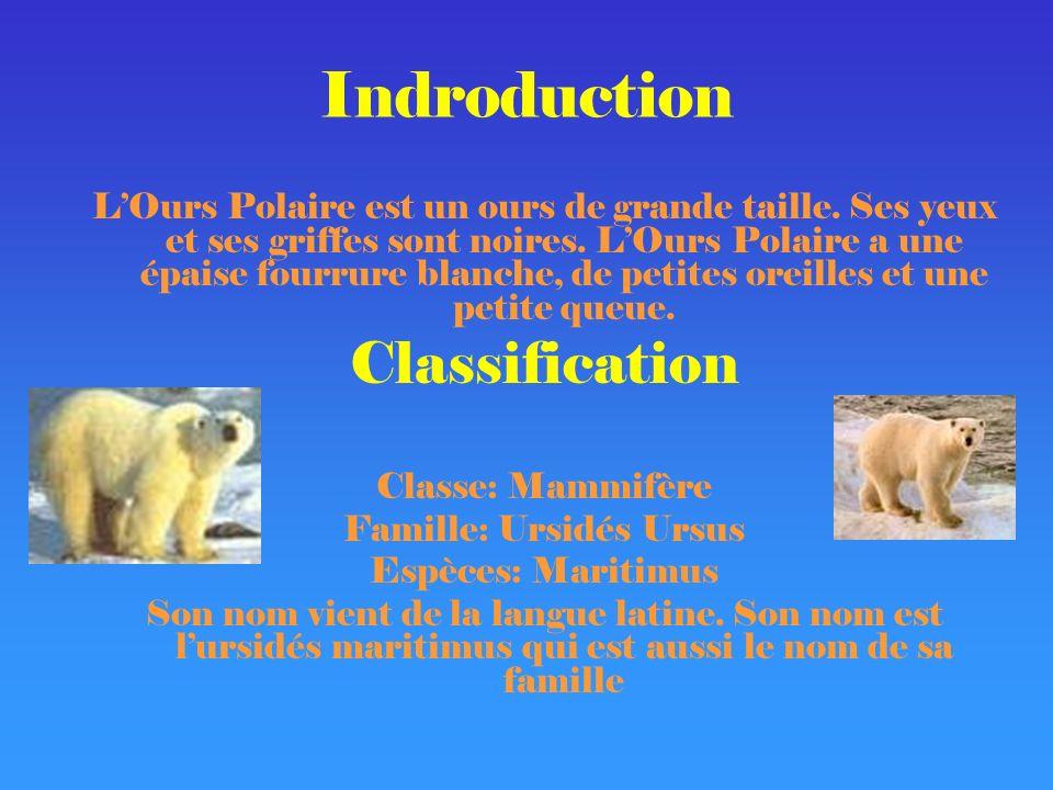 Habitat L Ours Polaire vit le long des côtes arctiques.