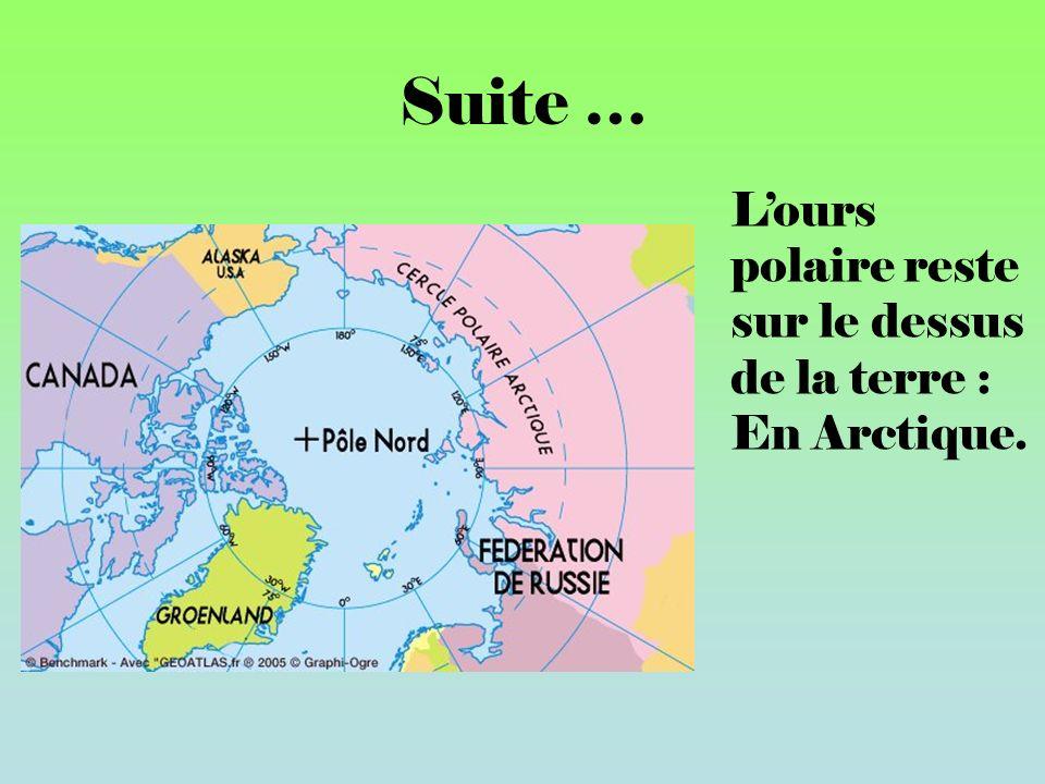 Suite … Lours polaire reste sur le dessus de la terre : En Arctique.