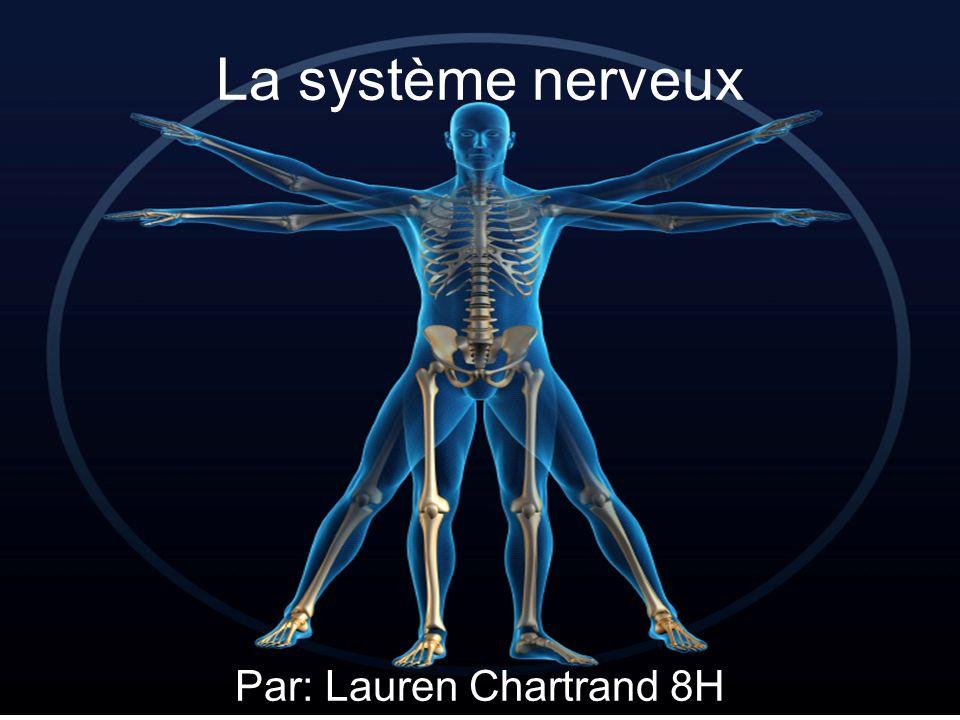La système nerveux Par: Lauren Chartrand 8H