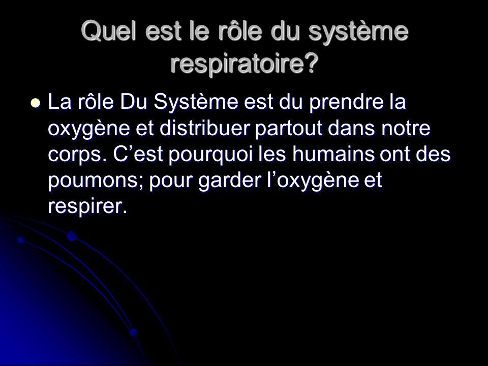 Quel est le rôle du système respiratoire.