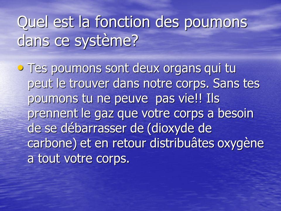 Quel est la fonction des poumons dans ce système.