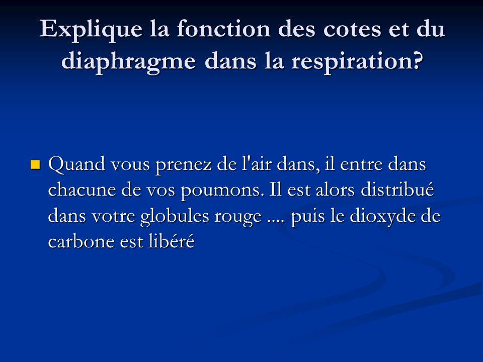 Explique la fonction des cotes et du diaphragme dans la respiration.