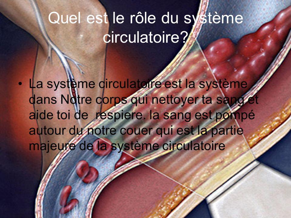 Quel est le rôle du système circulatoire.
