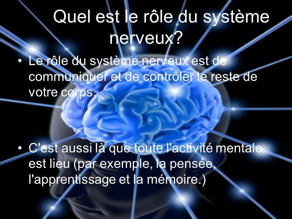 Quest-ce quun neurone.Un neurone est ce que votre cerveau est composé de.