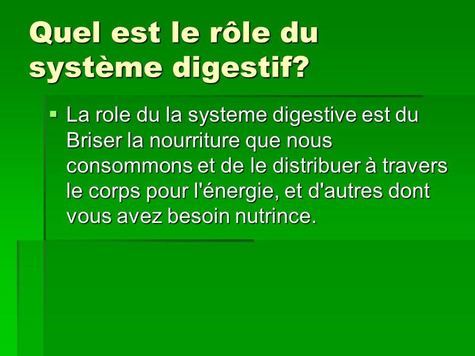 Quel est le rôle du système digestif.