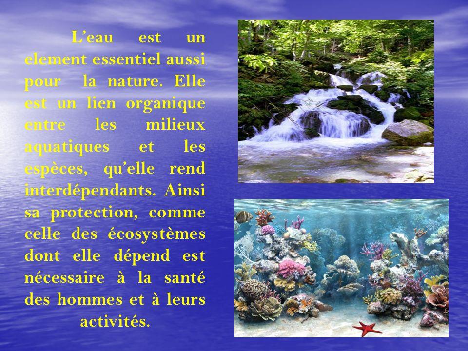 Leau est un element essentiel aussi pour la nature. Elle est un lien organique entre les milieux aquatiques et les espèces, quelle rend interdépendant