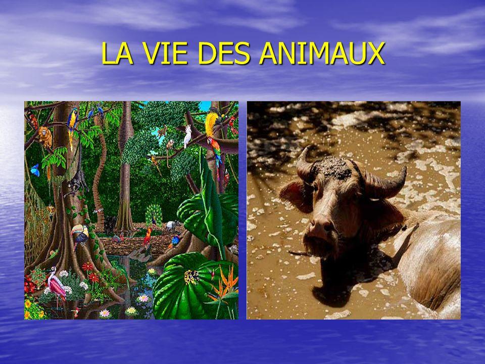 LA VIE DES ANIMAUX