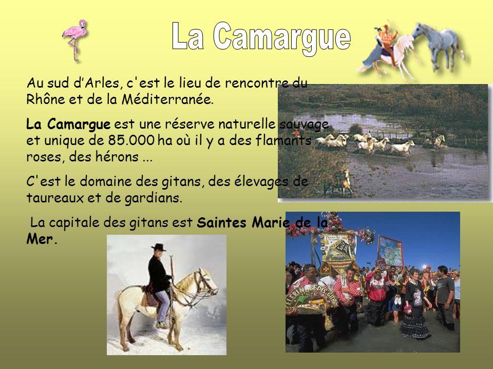 Au sud dArles, c est le lieu de rencontre du Rhône et de la Méditerranée.