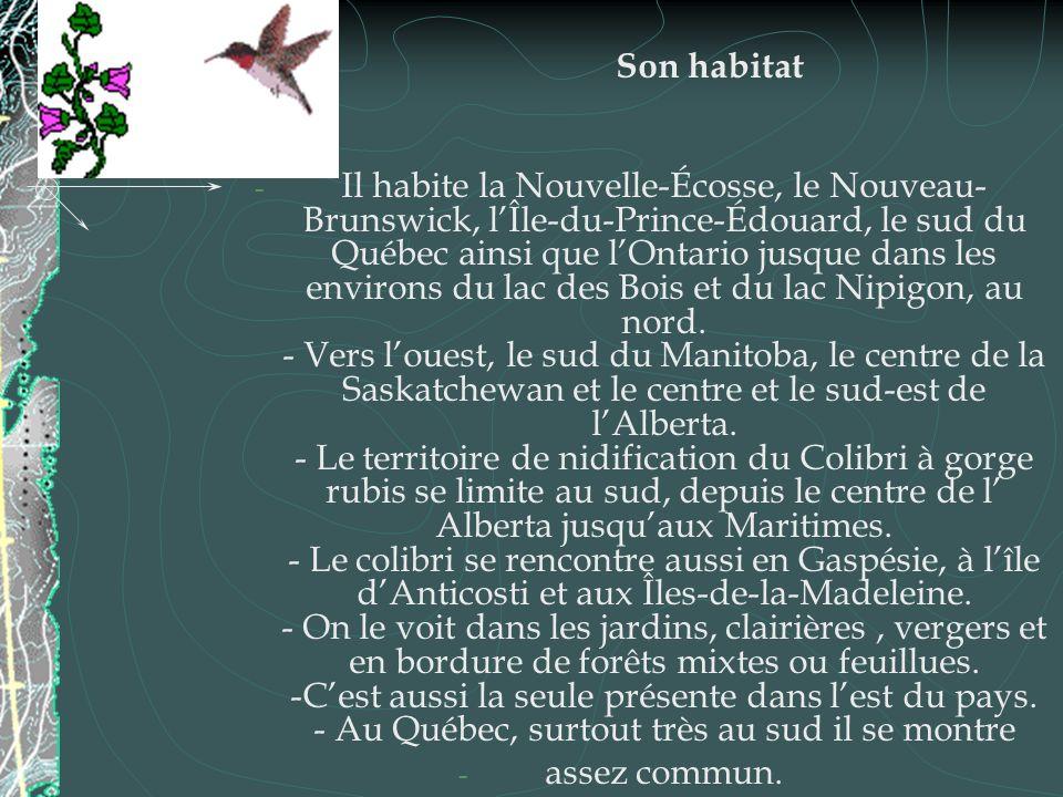 Son habitat - Il habite la Nouvelle-Écosse, le Nouveau- Brunswick, lÎle-du-Prince-Édouard, le sud du Québec ainsi que lOntario jusque dans les environ