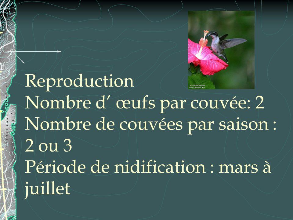 Reproduction Nombre d œufs par couvée: 2 Nombre de couvées par saison : 2 ou 3 Période de nidification : mars à juillet
