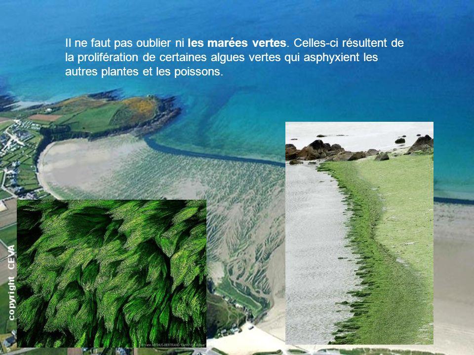 Il ne faut pas oublier ni les marées vertes. Celles-ci résultent de la prolifération de certaines algues vertes qui asphyxient les autres plantes et l