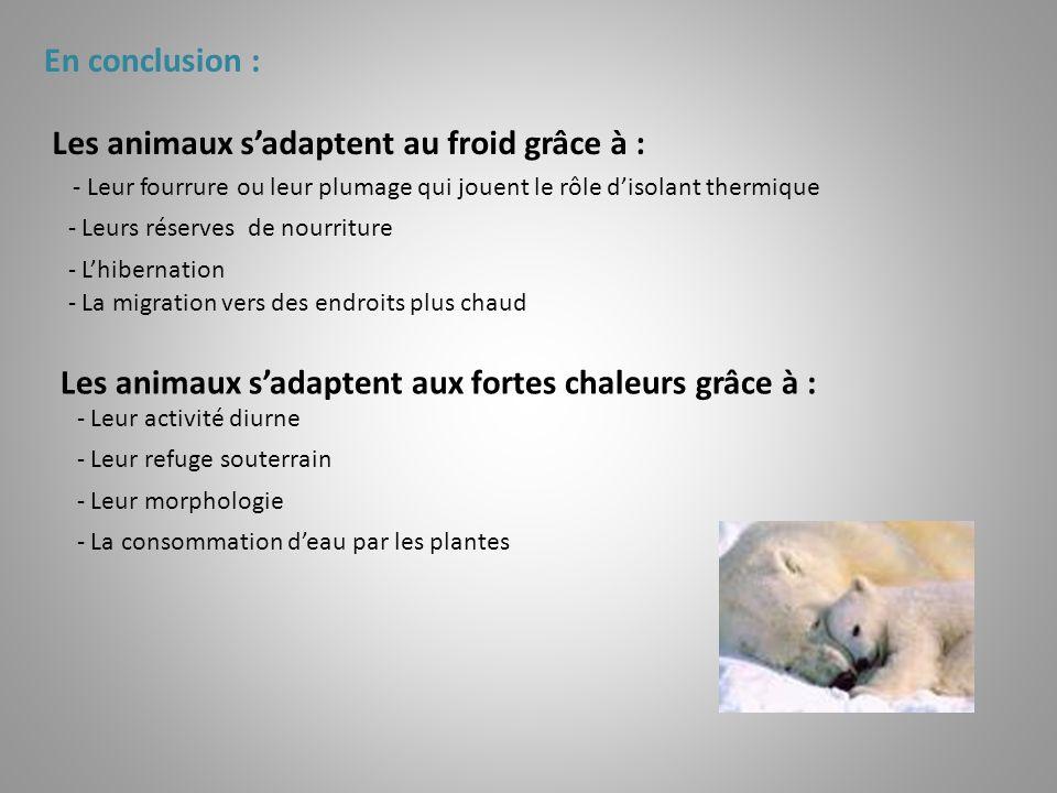 En conclusion : Les animaux sadaptent au froid grâce à : - Leur fourrure ou leur plumage qui jouent le rôle disolant thermique - Leurs réserves de nou