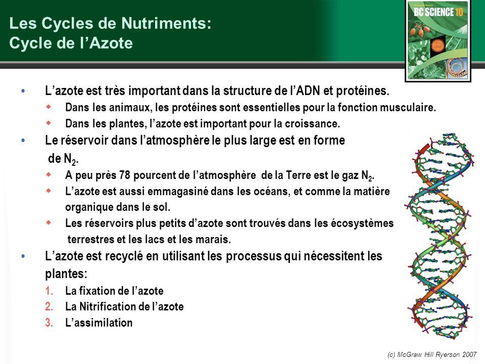 (c) McGraw Hill Ryerson 2007 Les Cycles de Nutriments: Cycle de lAzote Lazote est très important dans la structure de lADN et protéines.