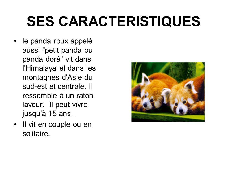 SES CARACTERISTIQUES le panda roux appelé aussi