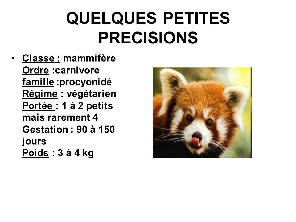 QUELQUES PETITES PRECISIONS Classe : mammifère Ordre :carnivore famille :procyonidé Régime : végétarien Portée : 1 à 2 petits mais rarement 4 Gestatio
