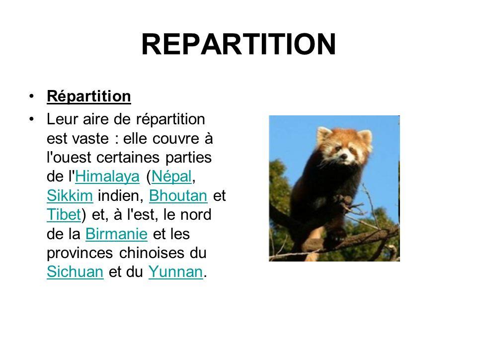 REPARTITION Répartition Leur aire de répartition est vaste : elle couvre à l'ouest certaines parties de l'Himalaya (Népal, Sikkim indien, Bhoutan et T