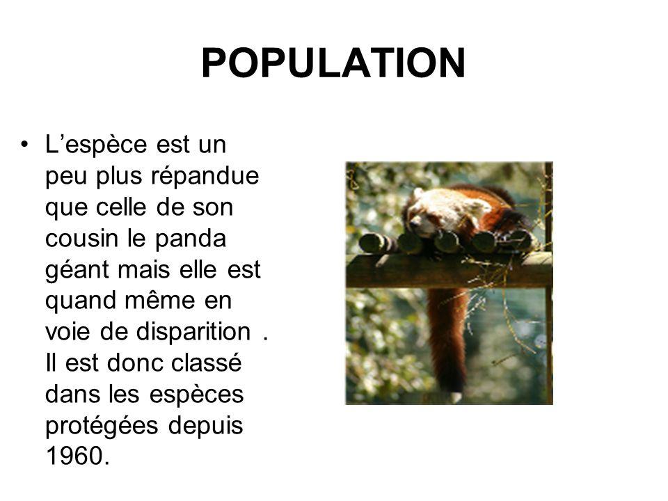 POPULATION Lespèce est un peu plus répandue que celle de son cousin le panda géant mais elle est quand même en voie de disparition. Il est donc classé