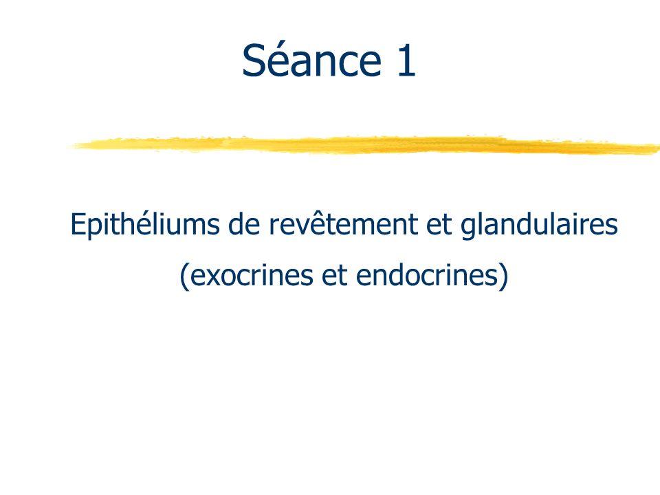 Séance 1 Epithéliums de revêtement et glandulaires (exocrines et endocrines)