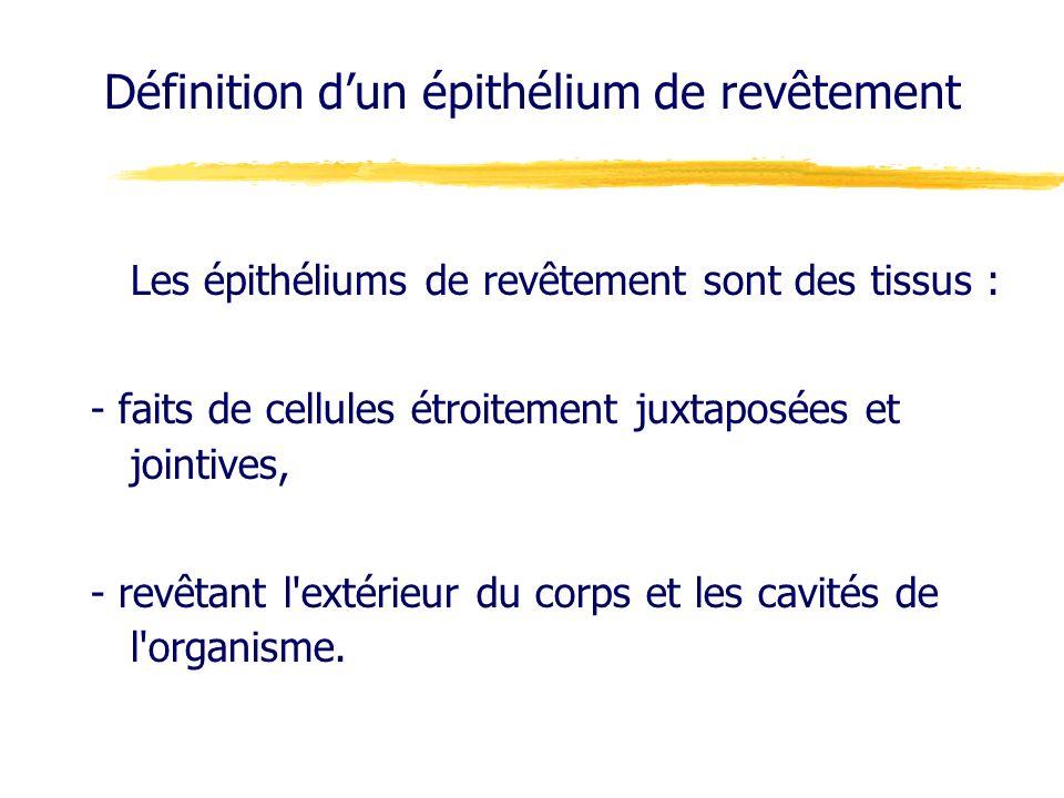 Définition dun épithélium de revêtement Les épithéliums de revêtement sont des tissus : - faits de cellules étroitement juxtaposées et jointives, - re