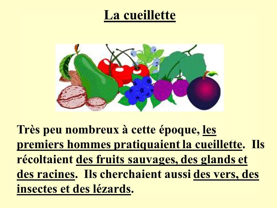 Très peu nombreux à cette époque, les premiers hommes pratiquaient la cueillette. Ils récoltaient des fruits sauvages, des glands et des racines. Ils