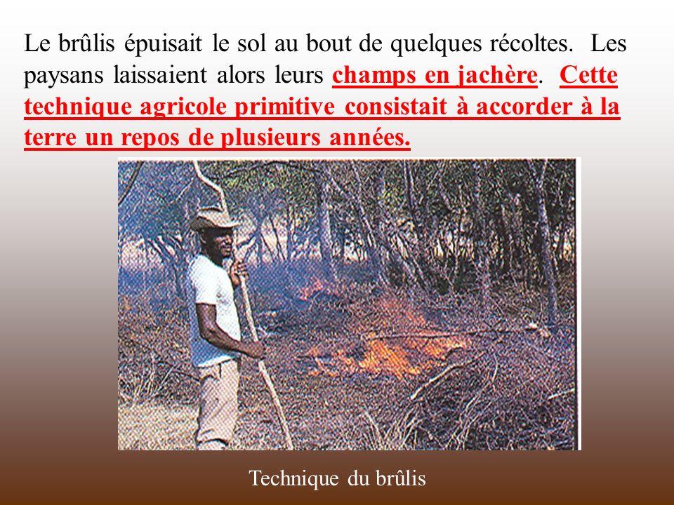 Le brûlis épuisait le sol au bout de quelques récoltes. Les paysans laissaient alors leurs champs en jachère. Cette technique agricole primitive consi