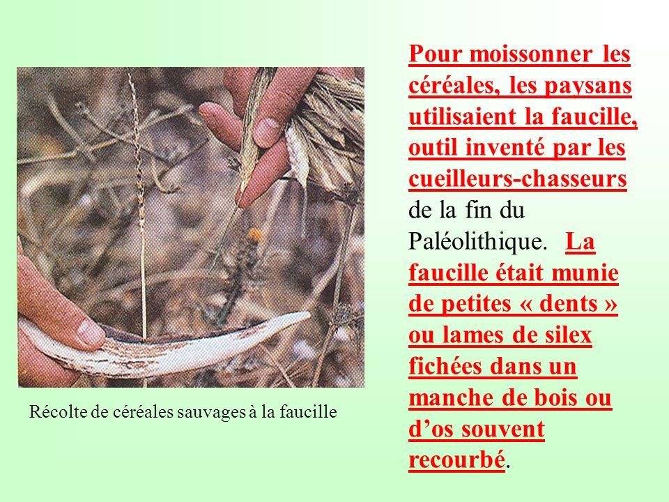 Pour moissonner les céréales, les paysans utilisaient la faucille, outil inventé par les cueilleurs-chasseurs de la fin du Paléolithique. La faucille