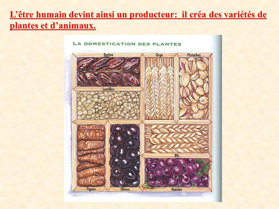 Lêtre humain devint ainsi un producteur: il créa des variétés de plantes et danimaux.