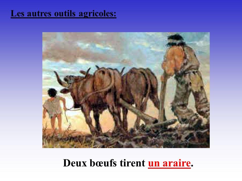 Les autres outils agricoles: Deux bœufs tirent un araire.