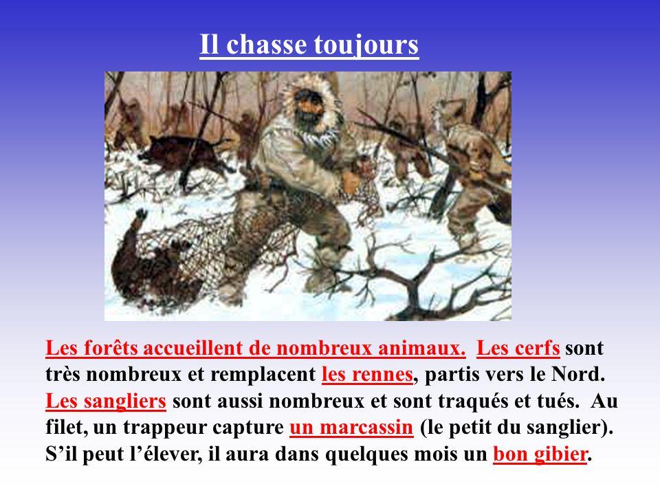 Il chasse toujours Les forêts accueillent de nombreux animaux. Les cerfs sont très nombreux et remplacent les rennes, partis vers le Nord. Les sanglie