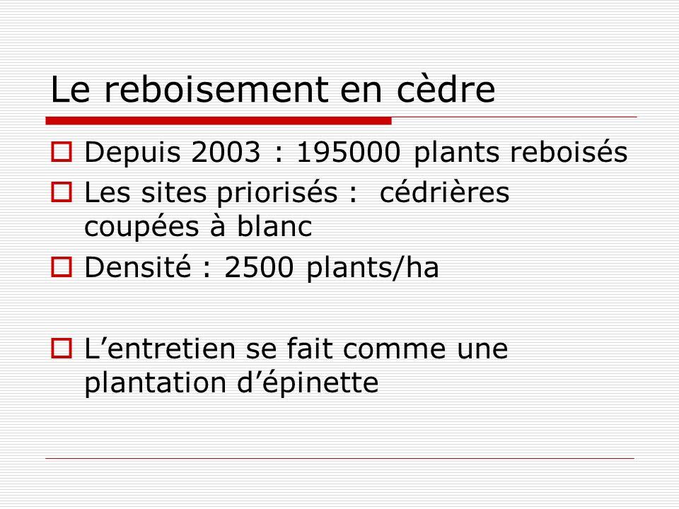 Le reboisement en cèdre Depuis 2003 : 195000 plants reboisés Les sites priorisés : cédrières coupées à blanc Densité : 2500 plants/ha Lentretien se fait comme une plantation dépinette