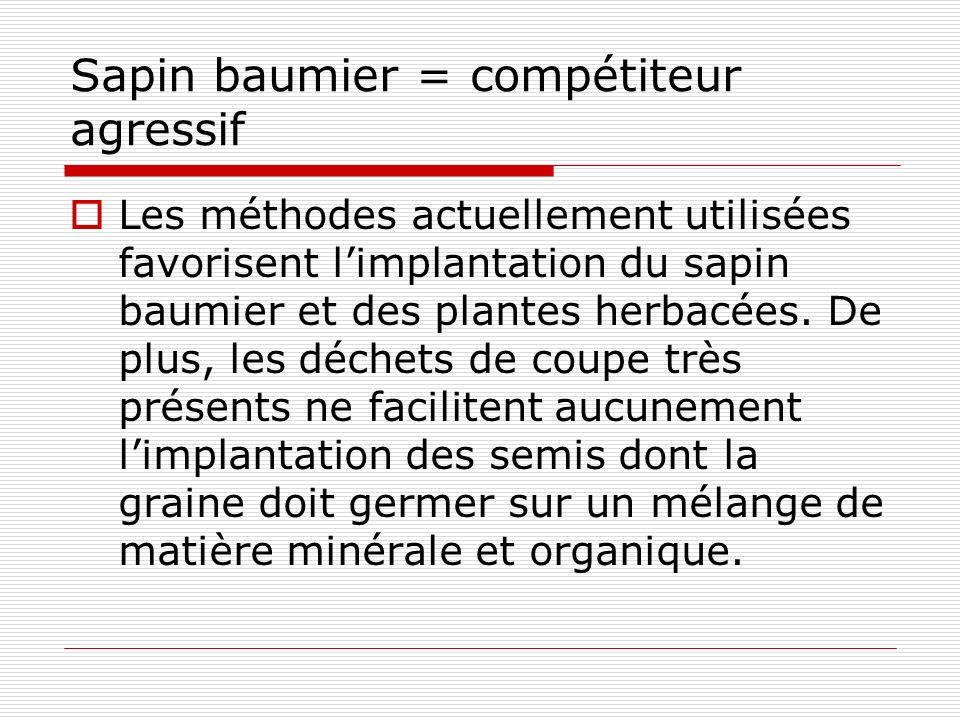 Sapin baumier = compétiteur agressif Les méthodes actuellement utilisées favorisent limplantation du sapin baumier et des plantes herbacées.